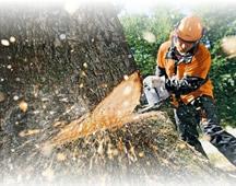 Спил, удаление и обрезка деревьев